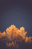 Yellow tree and starry sky at autumn night Stock Photo