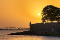 Yellow tree sunset San Juan Stock Photos