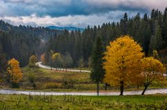 Yellow trees along the mountain road in autumn Stock Photo