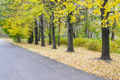 Yellow trees along the road Royalty Free Stock Image