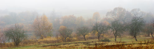 Yellow trees in autumn. fog Royalty Free Stock Photography
