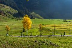 Yellow trees in autumn landscape under mount Rigi, Alps Stock Photography