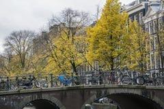 Yellow trees and bridge with bikes in autumn Stock Photos