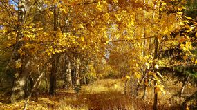Yellow Trees at Day Time Stock Photography