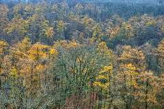Yellow Trees in Dense Forest Stock Photo