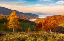 Yellow trees on the edge of a hill in autumn. Lovely mountain landscape with valley in fog under the gorgeous sky Stock Image