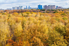 Yellow trees in forest and city on horizon in autumn Royalty Free Stock Photography
