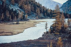 Yellow trees and grass on the banks of the mountain river. Autumn weather stock photography