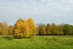 Yellow trees in a green field Stock Photography