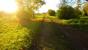 Yellow trees and green fields. Aerial footage. Low altitude flight. stock footage