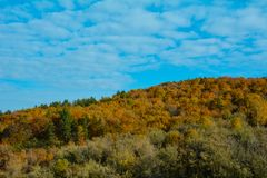 Autumn landscape - yellow trees and blue sky stock image