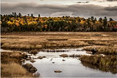 Yellow Trees Line the Edge of Brown Marsh in Maine. In Autumn Stock Photo