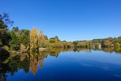 Autumn shot of golden yellow trees around lake against pure blue sky. Daylesford, VIC Australia. Yellow trees and reflections on calm blue lake.nnConcept of Royalty Free Stock Photography