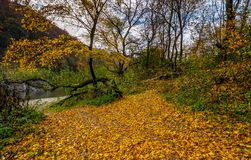 Yellow trees on rocky shore of the river. Lovely autumnal scenery with yellow trees on rocky shore. river flows at the foot of a hill with rocky cliff Royalty Free Stock Images