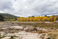 Yellow trees. Several trees that are yellowed by the arrival of autumn Royalty Free Stock Photo
