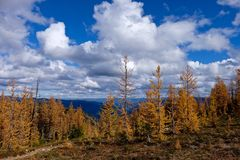 Yellow trees under blue sky with clouds. Stock Images