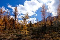 Yellow trees under blue sky with clouds. Stock Photography