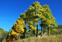 Yellow trees in the valley Stock Image