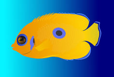 Yellow tropical fish Stock Image