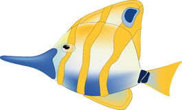 Yellow tropical small fish Royalty Free Stock Photos
