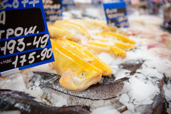 Yellow trout on fish market display Royalty Free Stock Photo