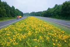 Yellow truck driving on yellow flower lined state highway in rural Virginia Royalty Free Stock Image