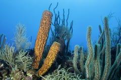 Yellow Tube Sponge royalty free stock images
