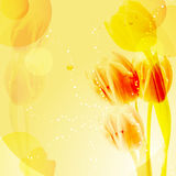 Yellow tulip background. Tulips on an abstract yellow background Stock Images
