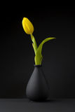 Yellow tulip Royalty Free Stock Image