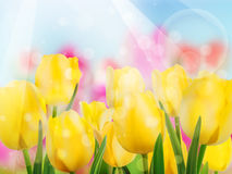 Yellow tulip with bokeh. EPS 10 Royalty Free Stock Photography