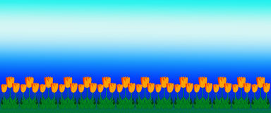 Yellow Tulip Border with Bright Blue Sky Stock Images