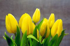Yellow tulip bouquet  isolated . Stock Photography