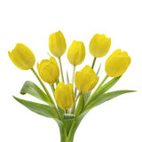 Yellow Tulip Bouquet. Spring tulips on sunny sky background Royalty Free Stock Photos
