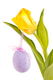 Yellow tulip with an easter egg Stock Photos