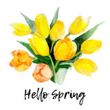 Yellow tulip flower isolated on white background with lettering `Hello Spring`, vintage watercolor illustration Royalty Free Stock Image