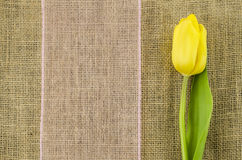 Yellow tulip flower with pink ribbon on linen background Royalty Free Stock Image