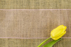 Yellow tulip flower with pink ribbon on linen background Royalty Free Stock Photos