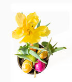 Yellow Tulip in a flower pot with Easter eggs and white background.  Stock Images