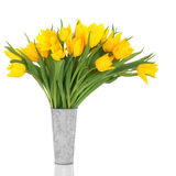 Yellow Tulip Flowers Royalty Free Stock Photo