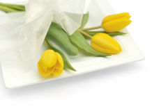 Yellow tulip flowers Stock Image
