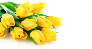 Yellow tulip flowers bouquet Stock Image