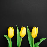 Yellow tulip flowers on dark background. Flat lay, top view. Stock Image