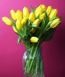 Yellow tulip flowers in glass vase Royalty Free Stock Photo