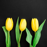 Yellow tulip flowers isolated on black background. Flat lay, Top view. Royalty Free Stock Photography