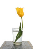 Yellow tulip in a glass Royalty Free Stock Photos