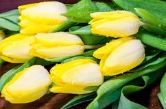 Yellow tulip Stock Photos