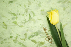 Yellow tulip and old key on green texture pape Stock Image