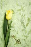 Yellow tulip and old key on green texture pape Stock Photos