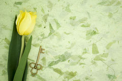 Yellow tulip and old key on green texture pape Royalty Free Stock Images