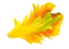 Yellow tulip petals stock photo